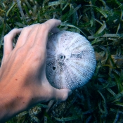 Hand and Urchin Shell