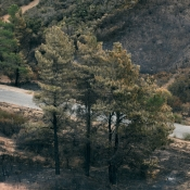 thomas fire trees